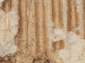 Close Up of a Torn Cardboard Sheet