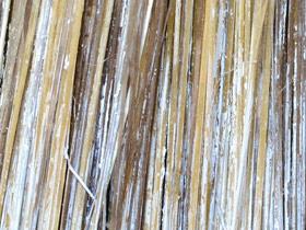 Close-Up of Paintbrush Bristles