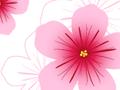 Hibiscus Seamless Pattern
