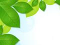 Green Leaves Frame Background